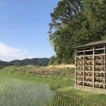 田んぼの片隅の玉葱小屋