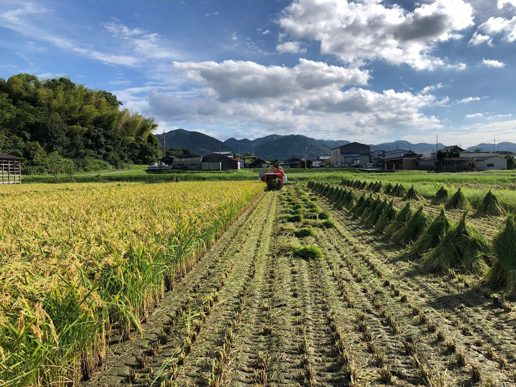 みやざきファームの稲刈り