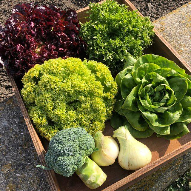 淡路島産 野菜詰め合せ(レタス4種+新玉ねぎ2個+ブロッコリー1個)